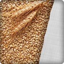 FIBC bag wheat and grain